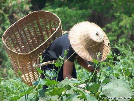 30218-thai-women-at-work-in-hill-tribes-chiang-rai-thailand.jpg