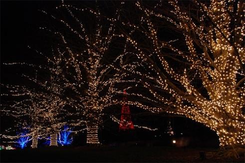 lots-of-lights-by-waterdragonfly.jpg