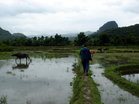 laos-ricefields-photo-by-vondelskater.jpg