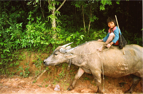 laos-kid-photo-by-mvsaur-at-flickr.jpg