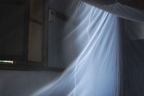 Mosquito Net & Morning Light by Andy Hares