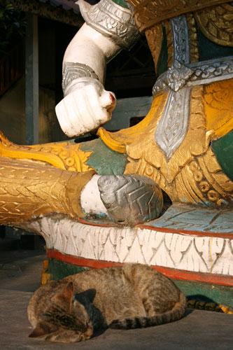 Cat at Wat Simuang
