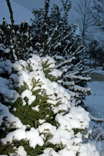 snow 1-20-09