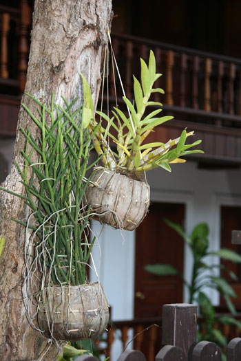 In Luang Prabang Laos
