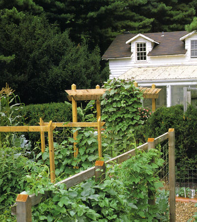 photo from vegetable gardening with derek fell book