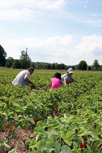 Ira Cline Farm