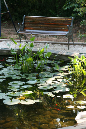 Tanja's pond