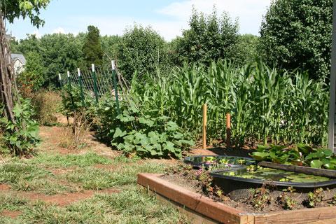 My dad's garden