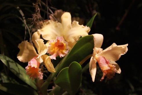 Holiday Lights At Daniel Stowe Botanical Garden Nye Noona